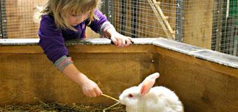 Контактный зоопарк «Весёлая овечка»